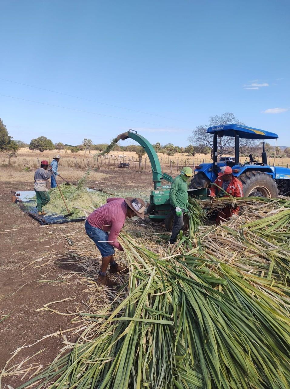 Prefeitura auxilia agricultores na produção da silagem em Santa Rosa