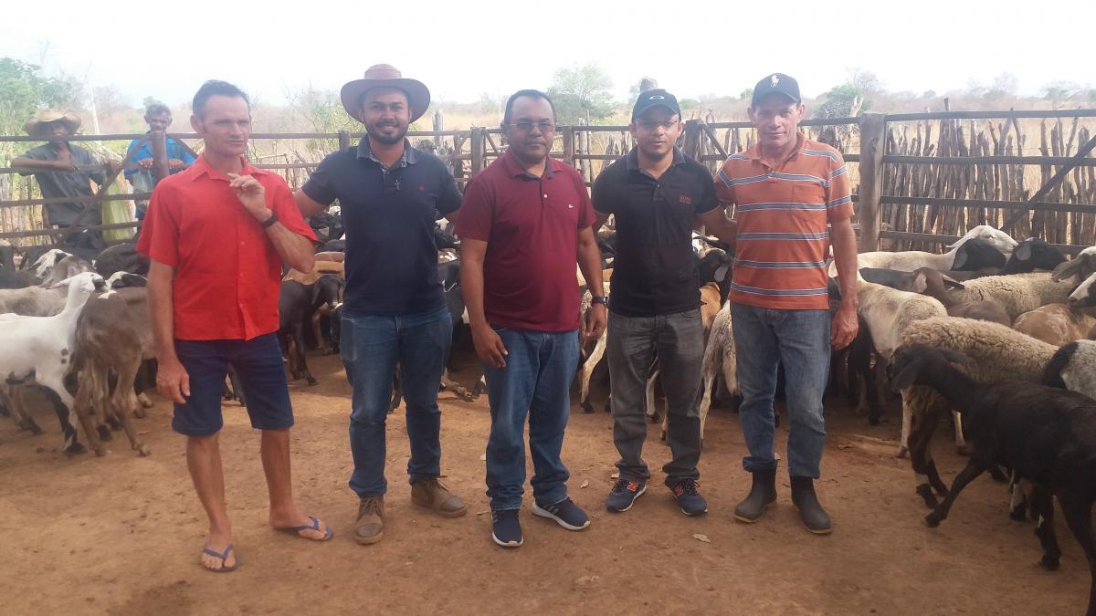 Produtores foram contemplados com lotes de ovelhas em Santa Rosa
